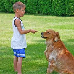 dog-obedience-training