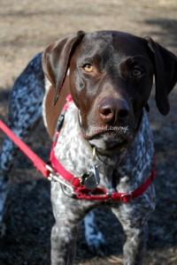 dog-training-pointers